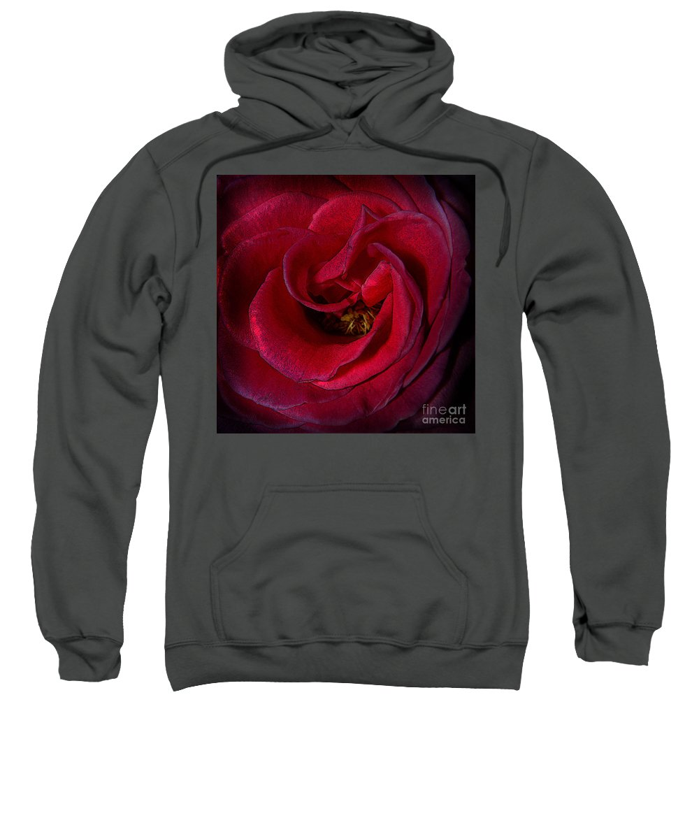 Clay Sweatshirt featuring the photograph Majestic Rose by Clayton Bruster