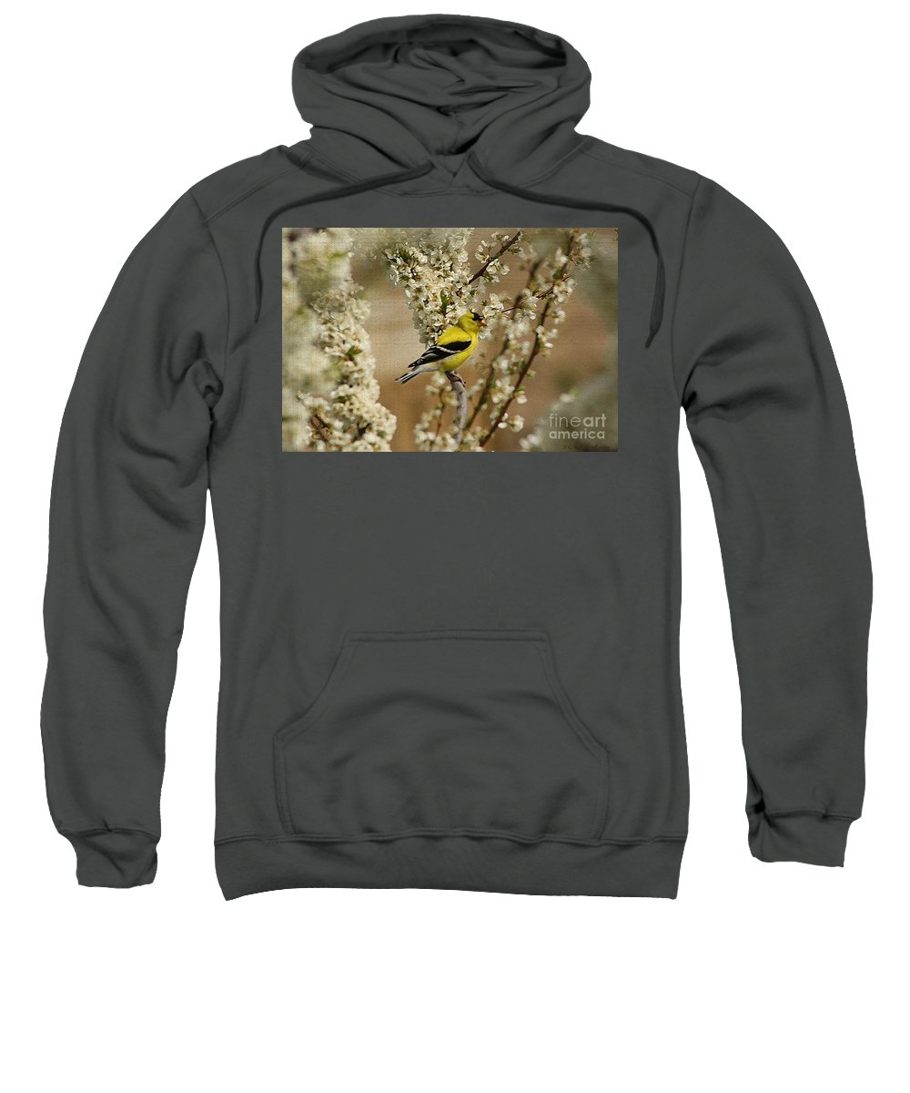 Finch Sweatshirt featuring the photograph Male Finch In Blossoms by Cathy Beharriell