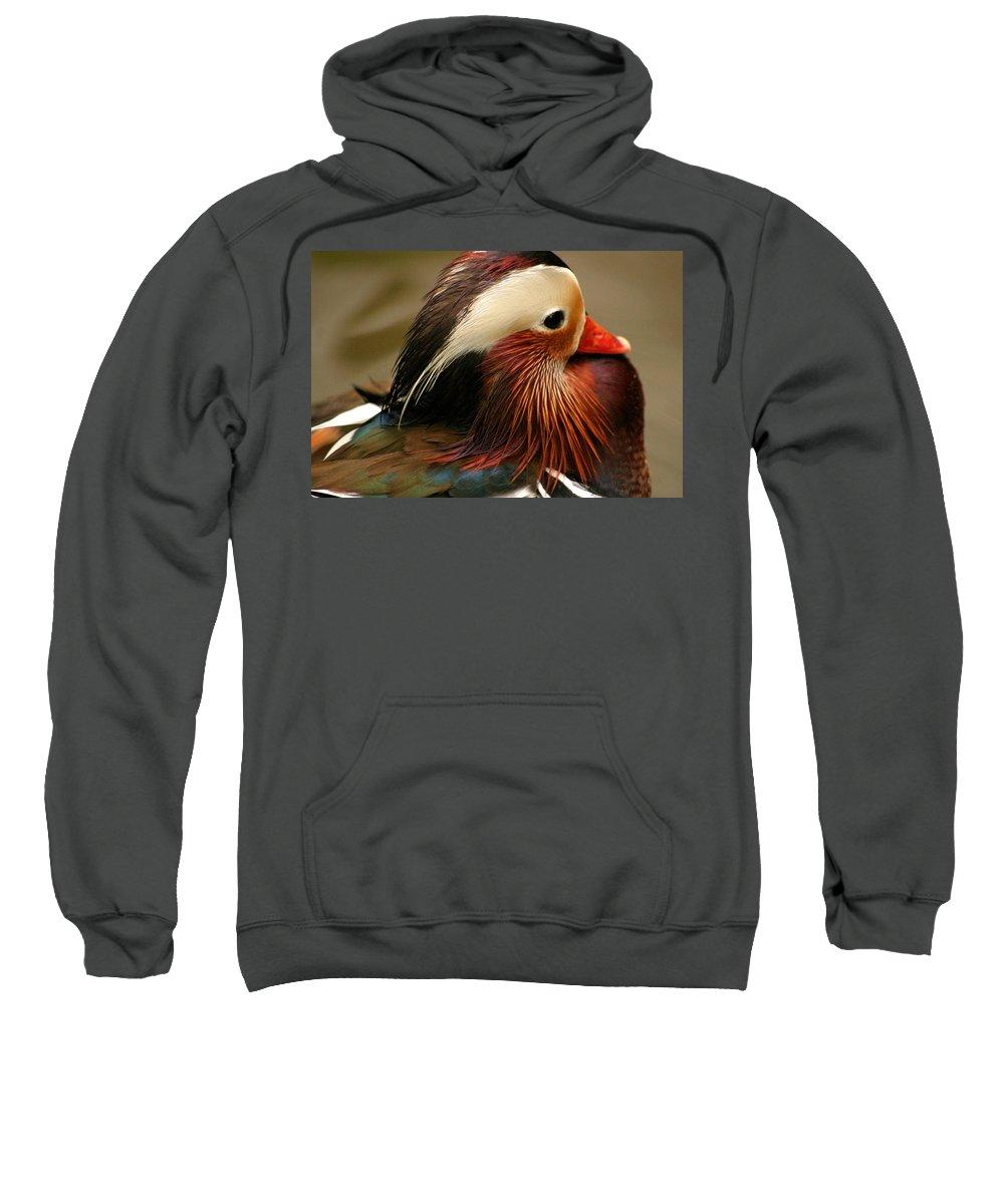 Mandarin Duck Sweatshirt featuring the photograph Male Mandarin Duck China by Ralph A Ledergerber-Photography