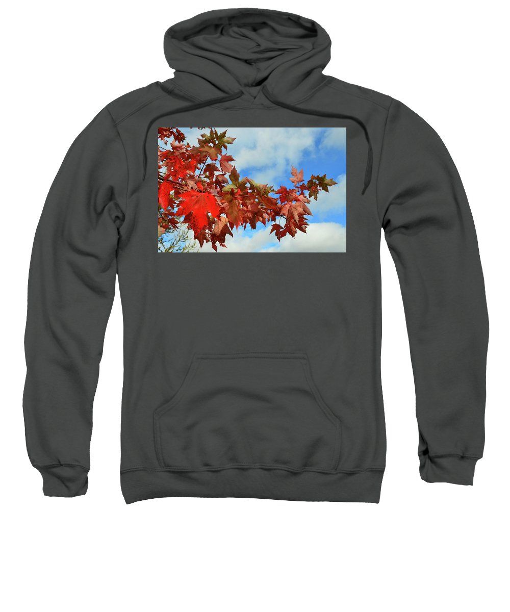 Fall Sweatshirt featuring the photograph Maple Leaves Against The Sky by Lyle Crump