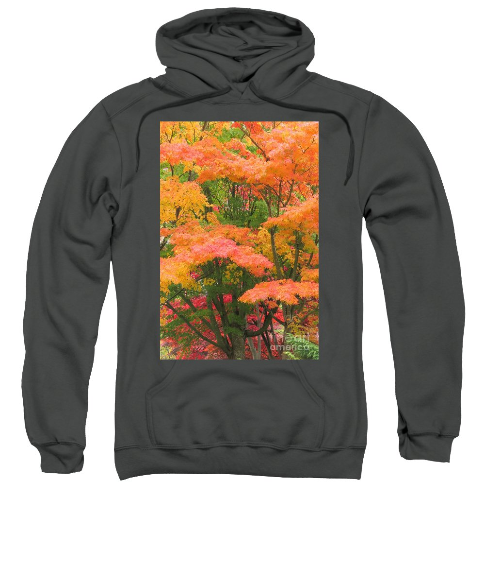 Nature Sweatshirt featuring the photograph Maple Magic by Frank Townsley