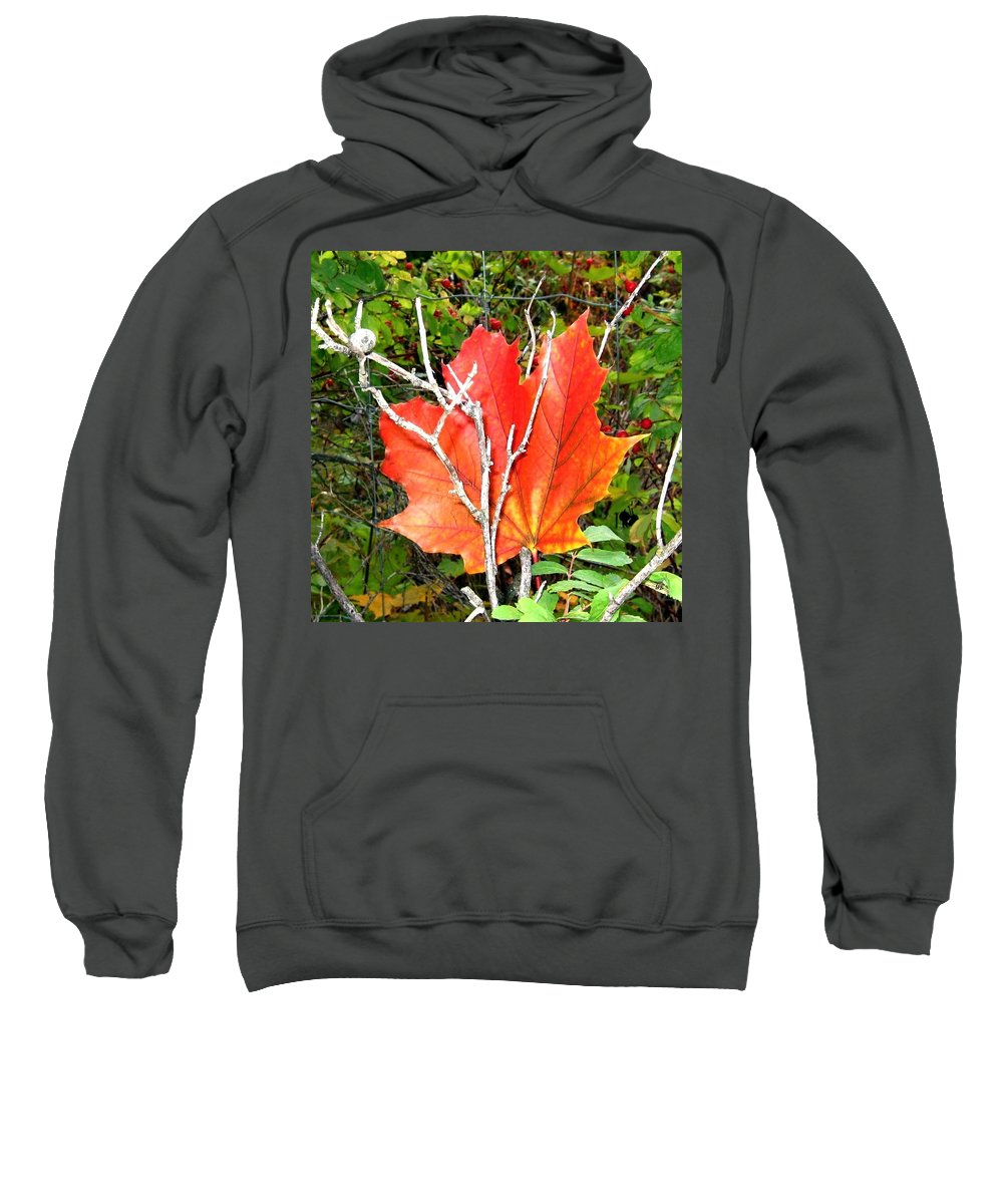 Autumn Sweatshirt featuring the photograph Maple Mania 6 by Will Borden