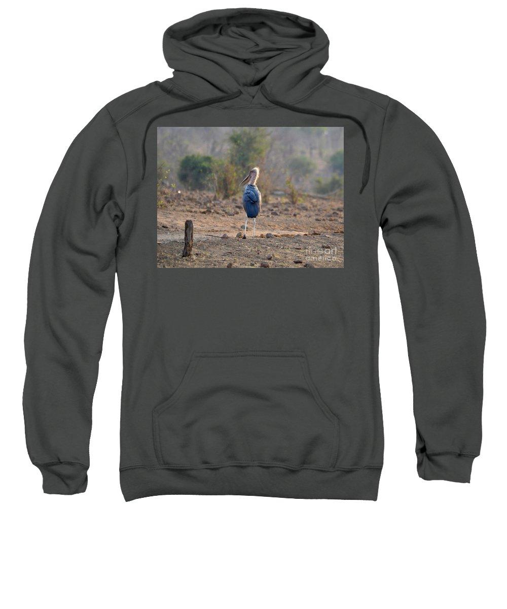 Animalia Sweatshirt featuring the photograph Marabou Stork Of Botswana Africa by Sherri Hubby