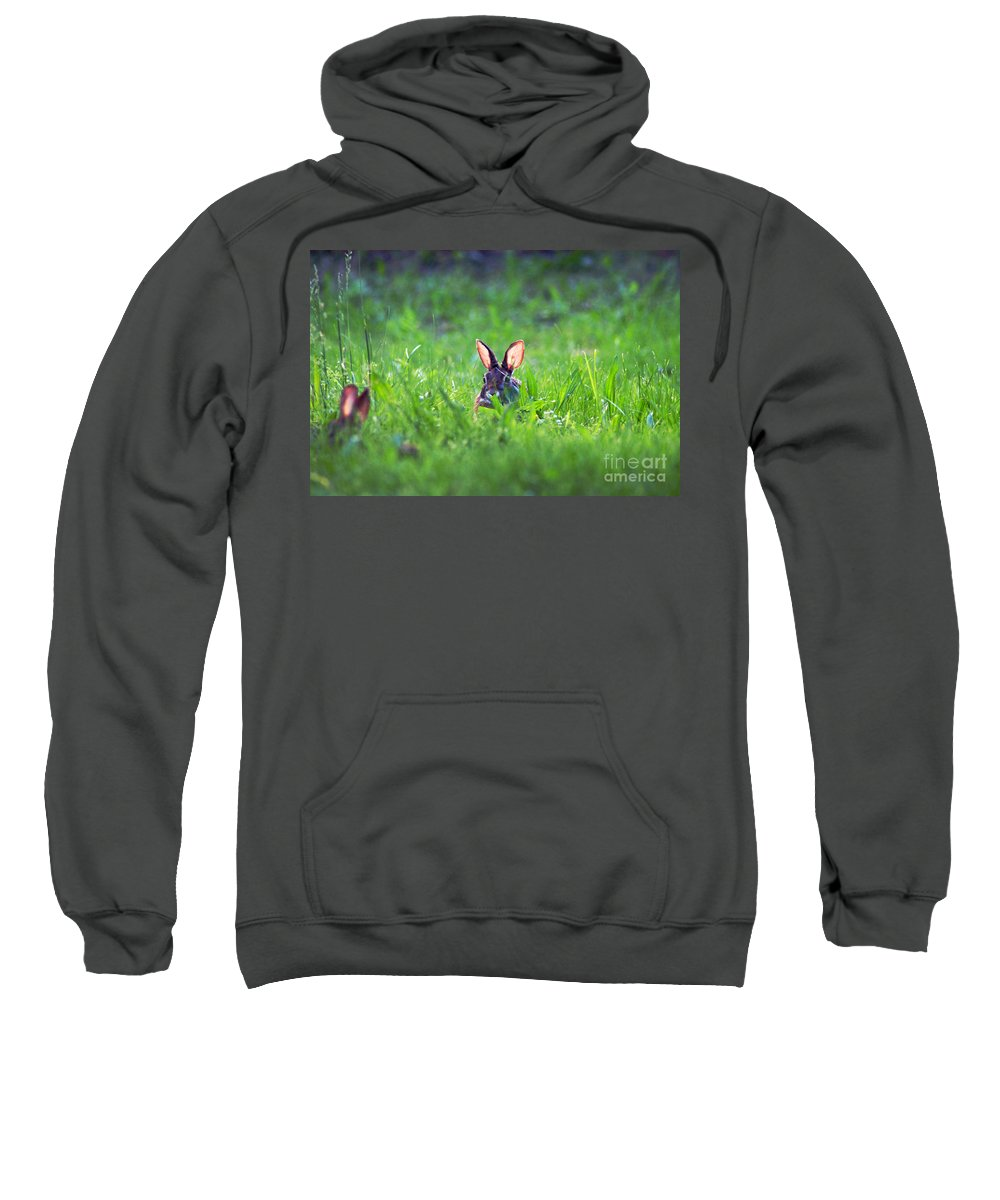 Clay Sweatshirt featuring the photograph Marco - Polo by Clayton Bruster
