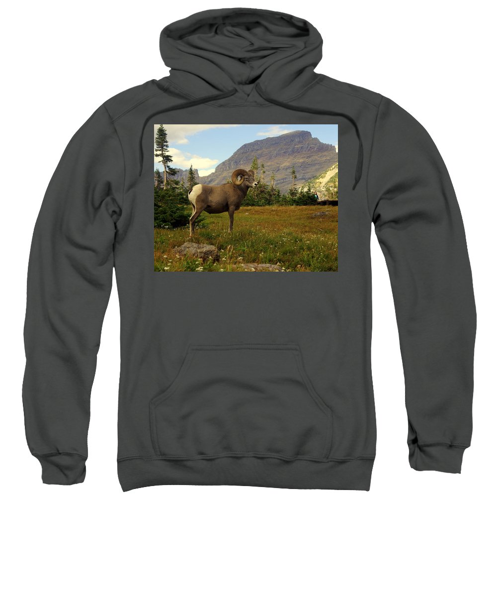 Big Horn Sheep Sweatshirt featuring the photograph Master Of His Domain by Marty Koch