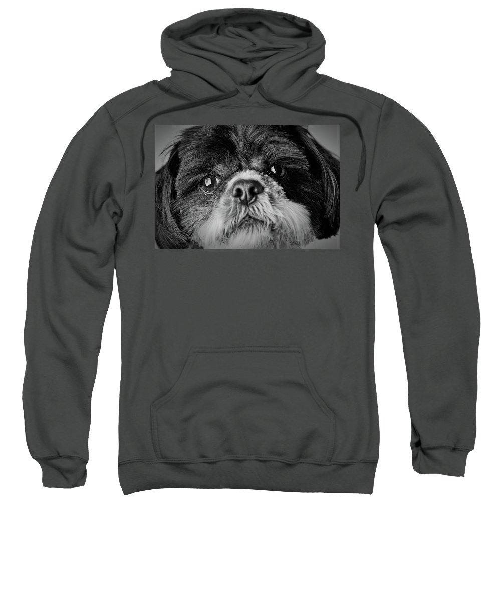 Shih Tzu Dog Sweatshirt featuring the photograph Max - A Shih Tzu Portrait by Onyonet Photo Studios