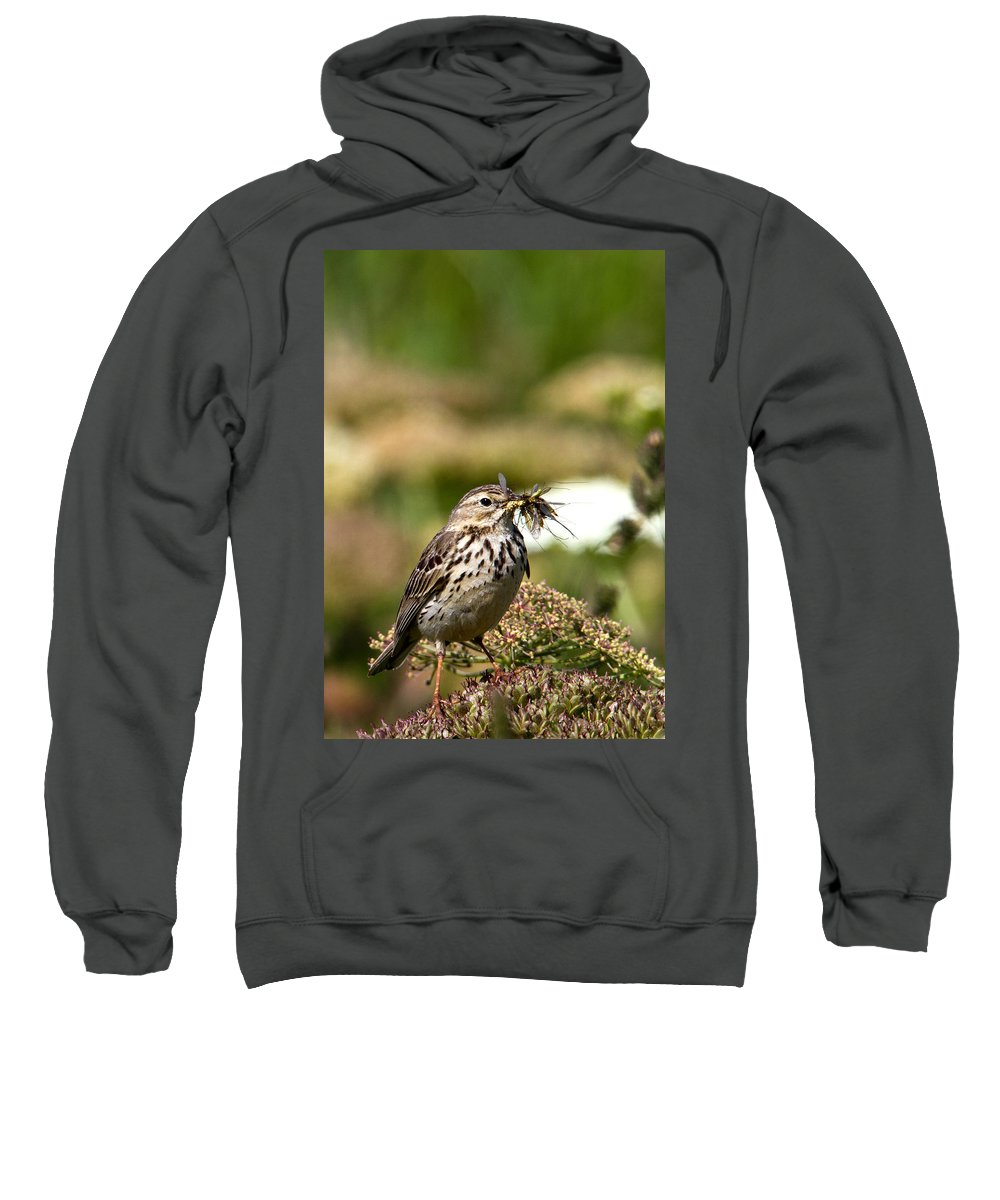 Meadow Pipit Sweatshirt featuring the photograph Meadow Pipit With Food by Bob Kemp