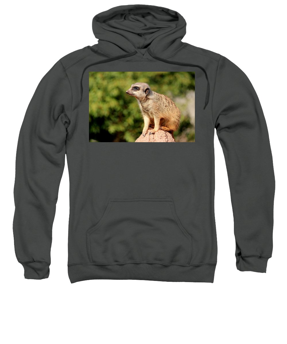 Meerkat Sweatshirt featuring the photograph Meerkat 1 by Heike Hultsch