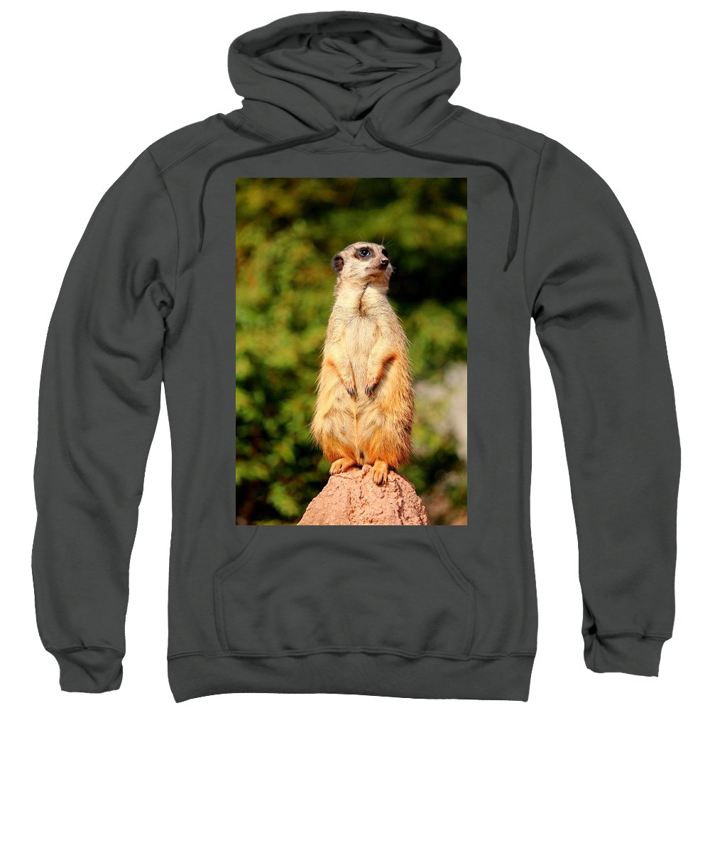 Meerkat Sweatshirt featuring the photograph Meerkat 2 by Heike Hultsch