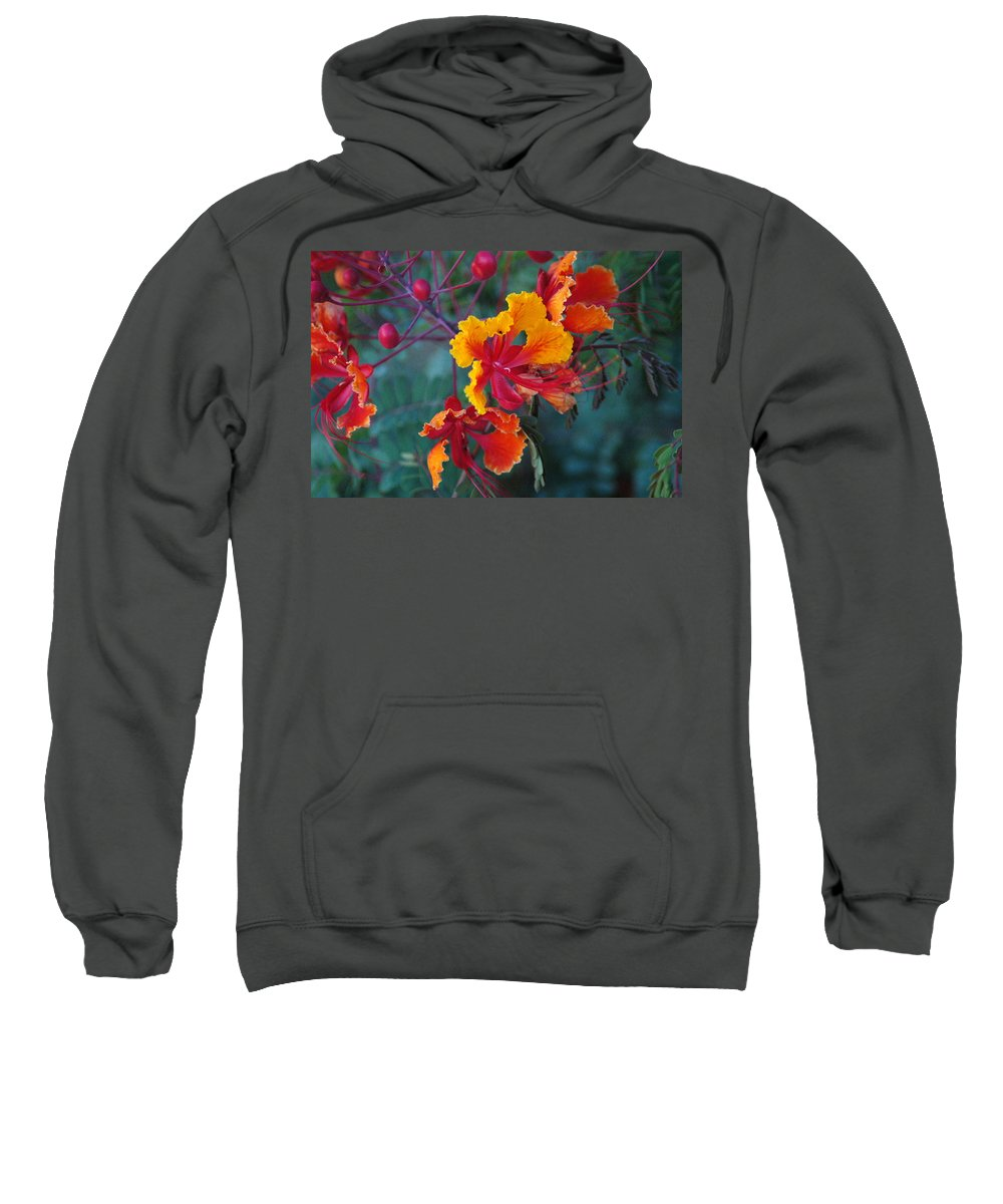 Orange Sweatshirt featuring the photograph Mexican Bird Of Paradise by Teresa Stallings