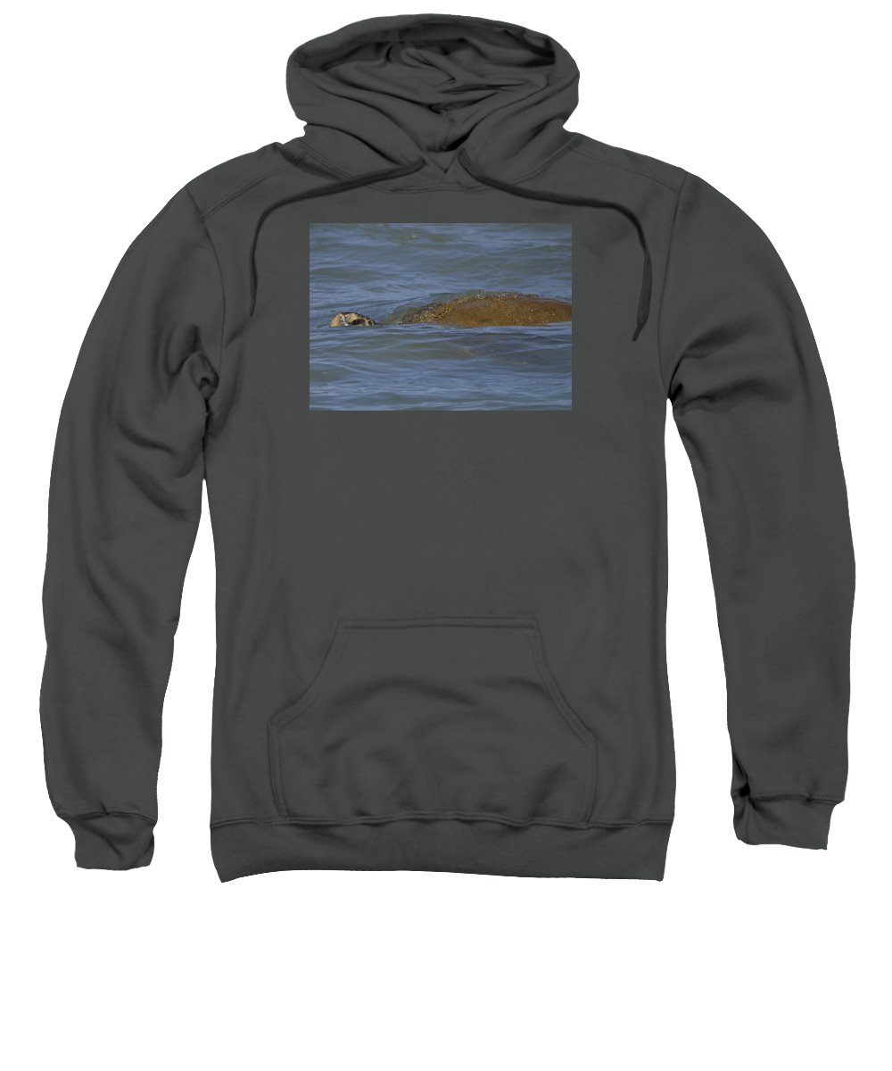 Sea Turtle Sweatshirt featuring the photograph Midday Swim by Karen Rose Warner