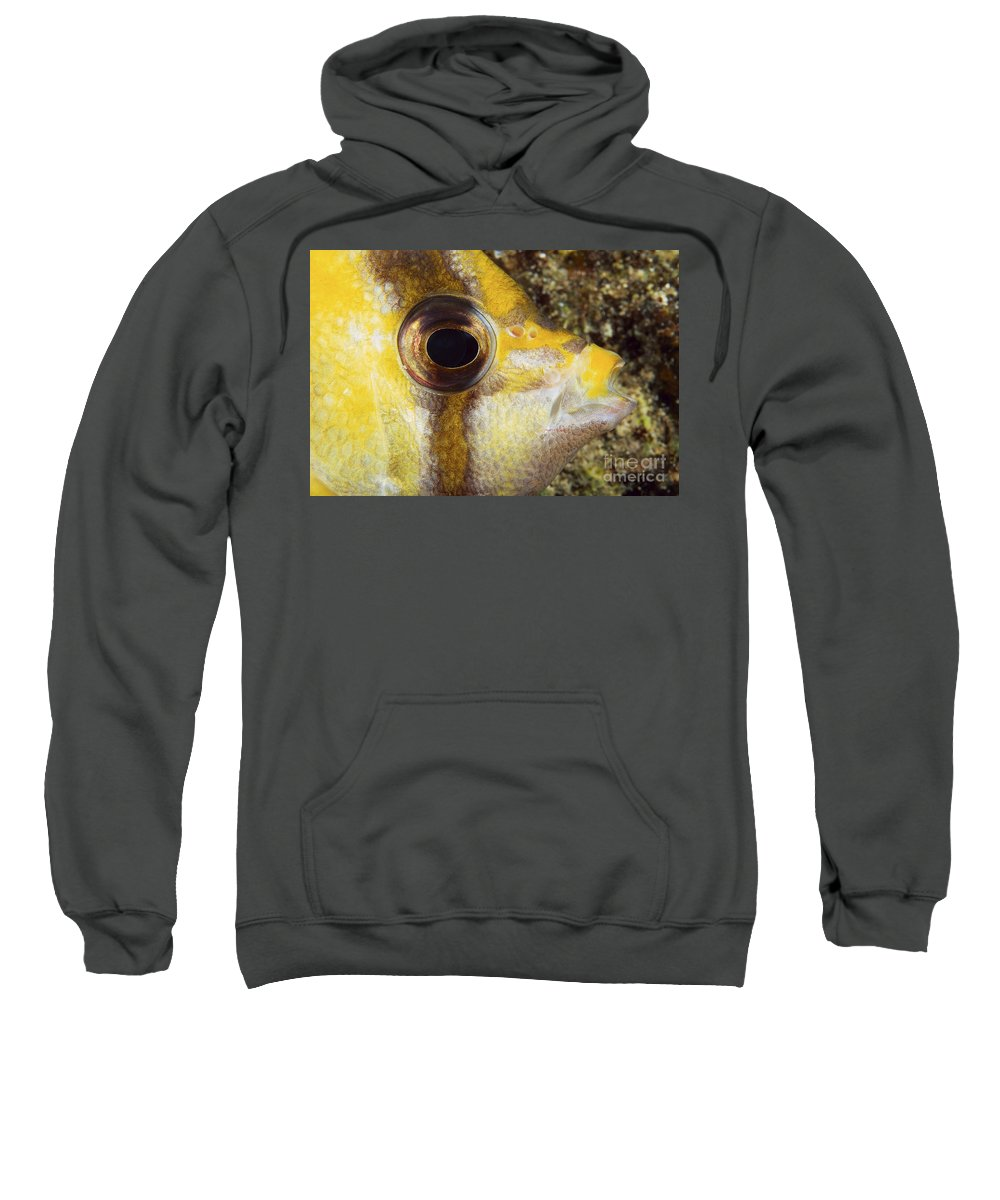30-csm0235 Sweatshirt featuring the photograph Milletseed Butterflyfish by Dave Fleetham - Printscapes
