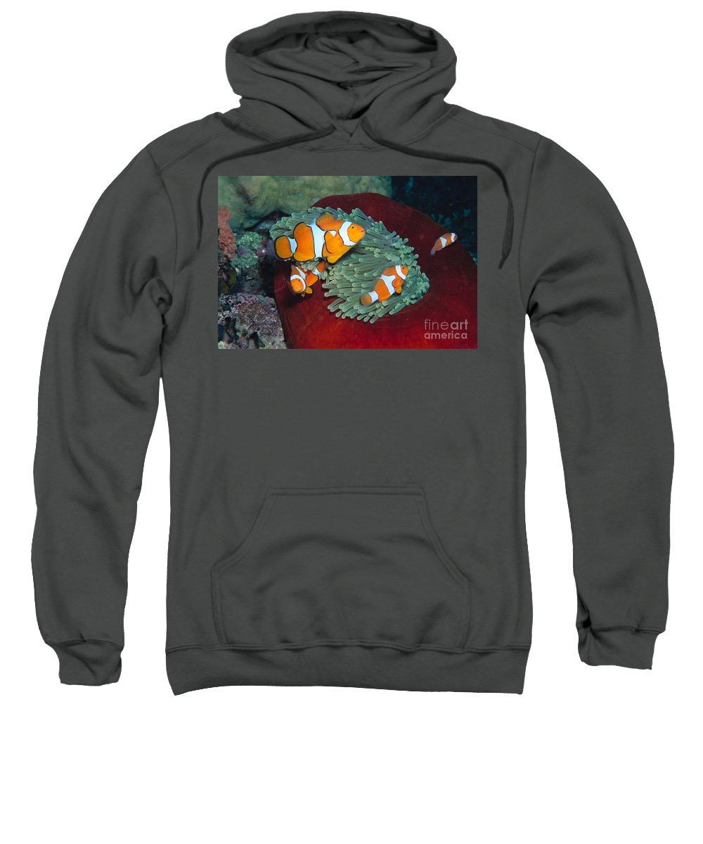 20-pfs0121 Sweatshirt featuring the photograph Milne Bay, Marine by Ed Robinson - Printscapes