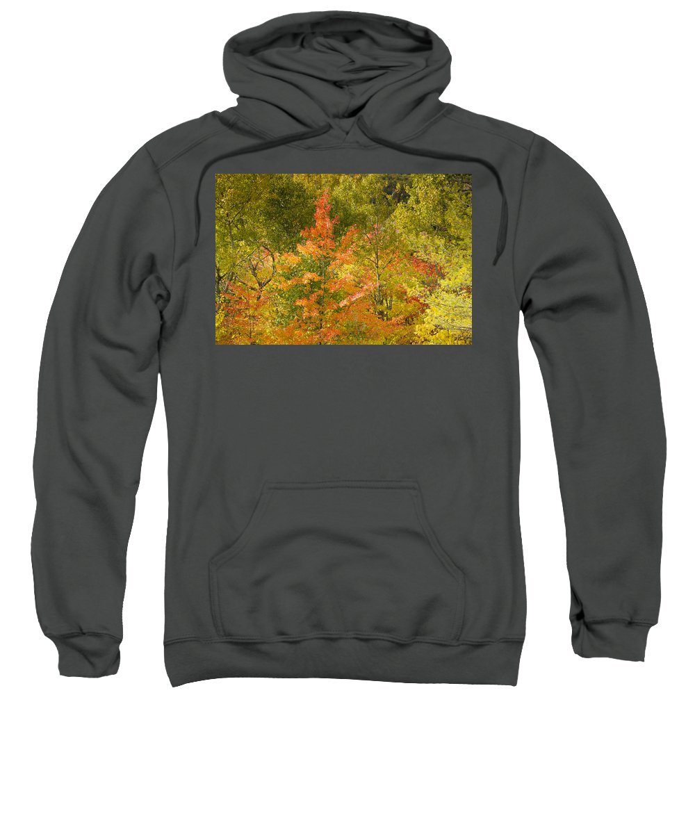 Tree Sweatshirt featuring the photograph Mixed Autumn by Phill Doherty