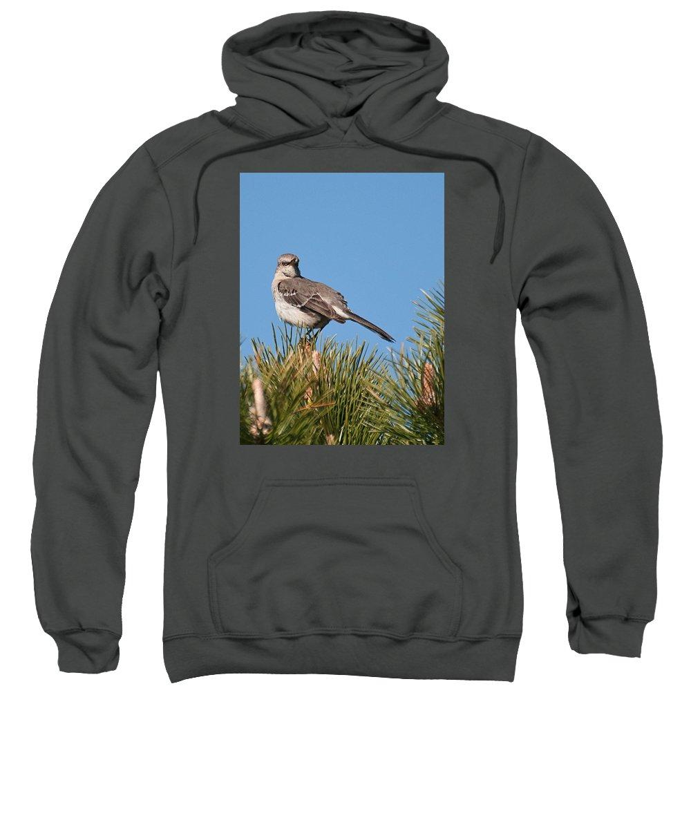 Sweatshirt featuring the photograph Mockingbird 01 by Robert Hayes
