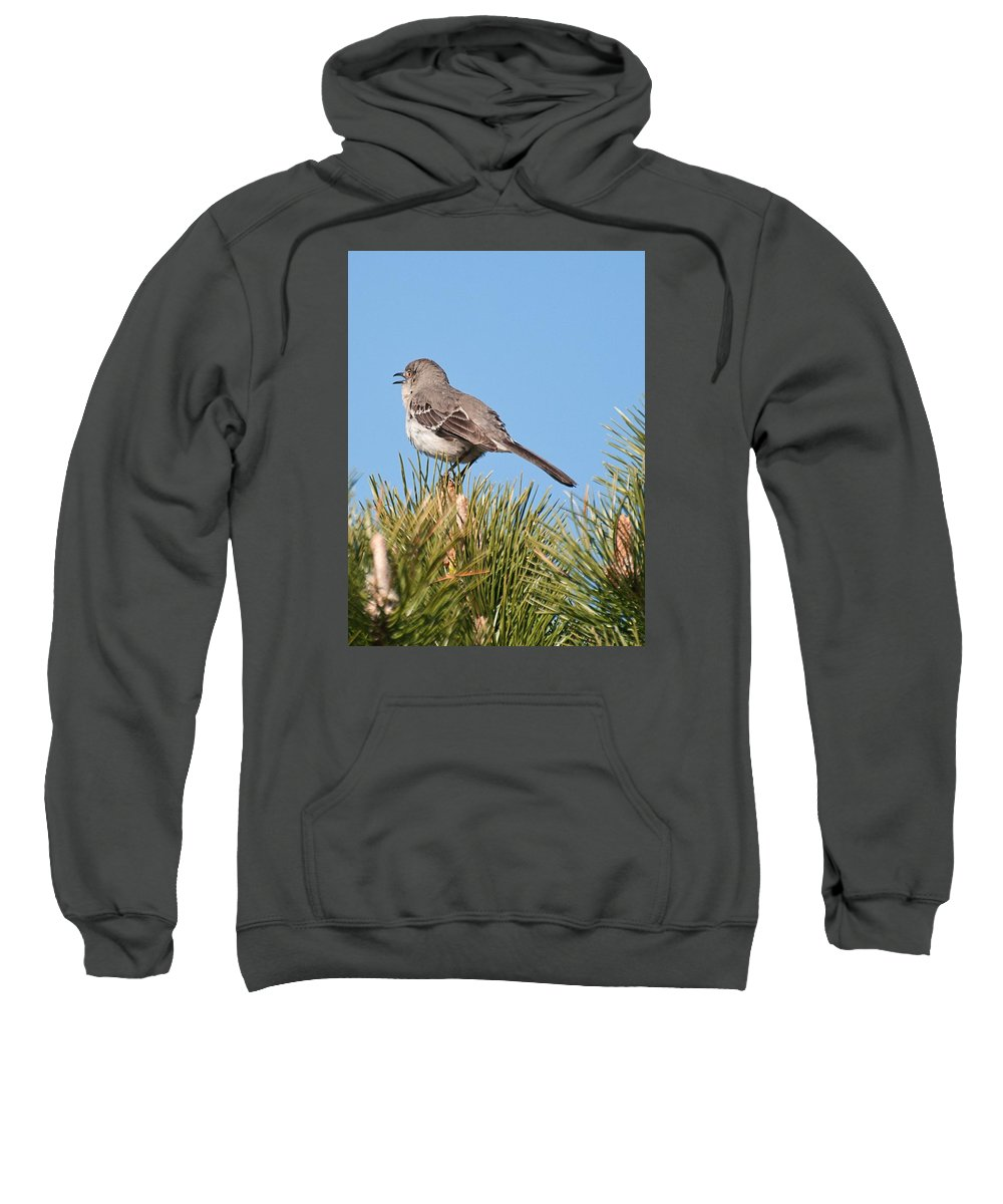 Sweatshirt featuring the photograph Mockingbird 02 by Robert Hayes