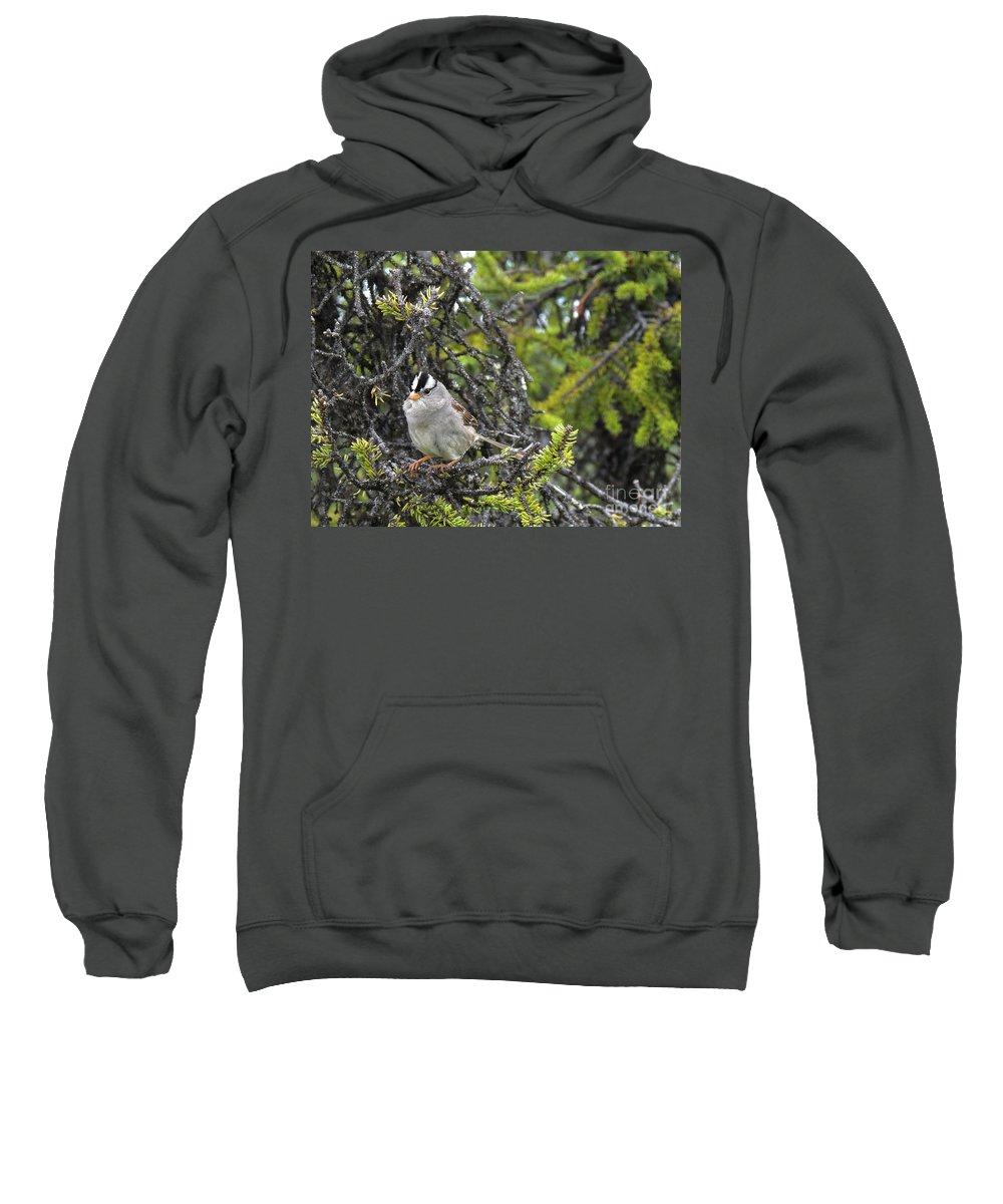 Bird Sweatshirt featuring the photograph Mohawk by Grant Bolei