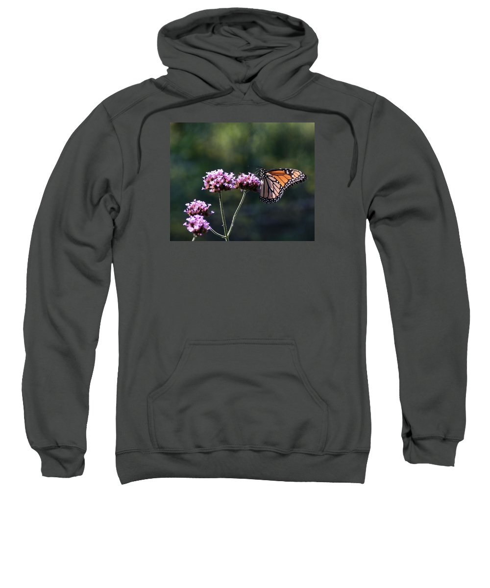 Monarch Butterfly Sweatshirt featuring the photograph Monarch Butterfly IIi by Eric Noa