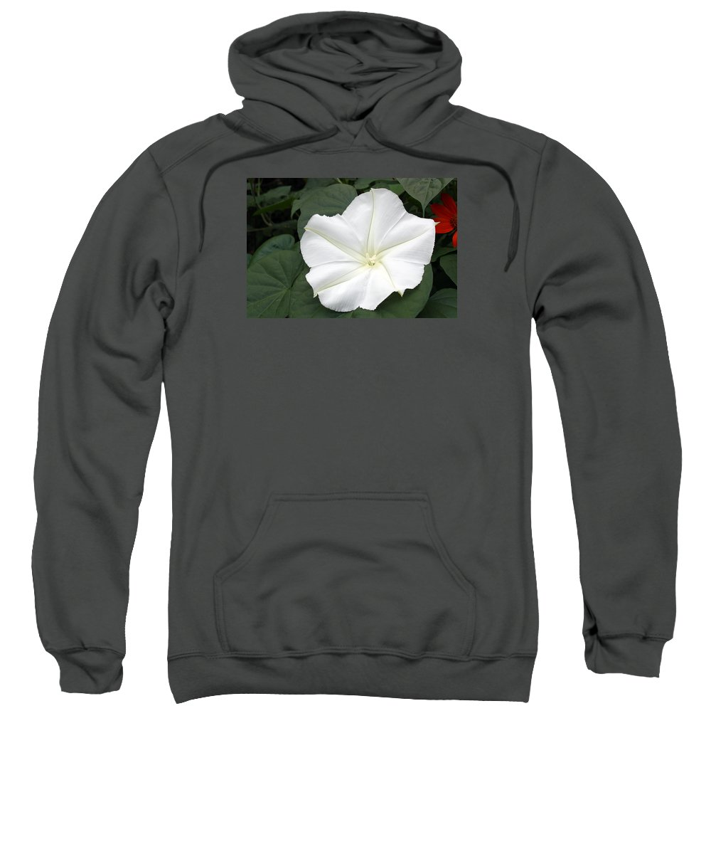 Moonflower Sweatshirt featuring the photograph Moonflower Blossom by Ted M Tubbs