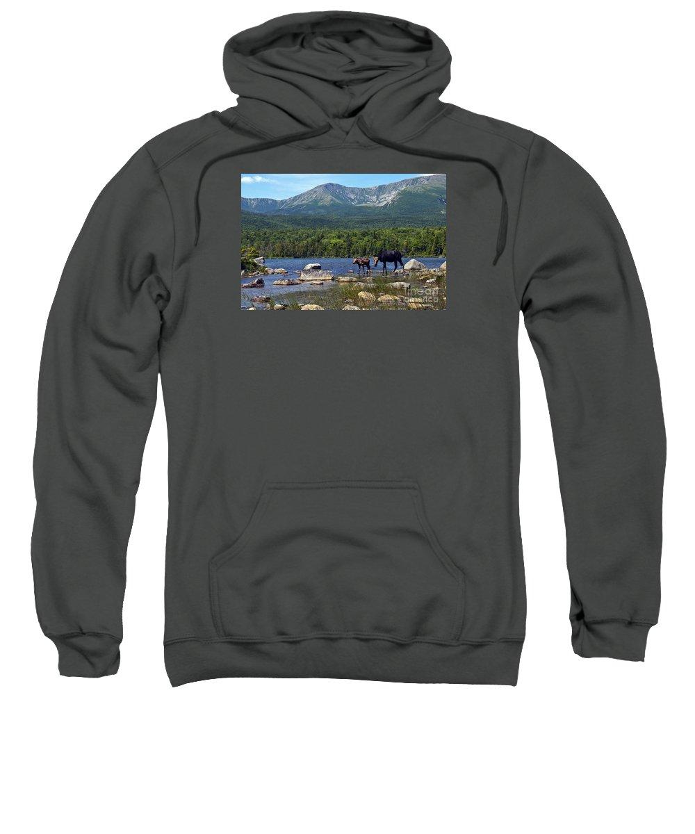 Maine Sweatshirt featuring the photograph Moose Baxter State Park Maine 2 by Glenn Gordon