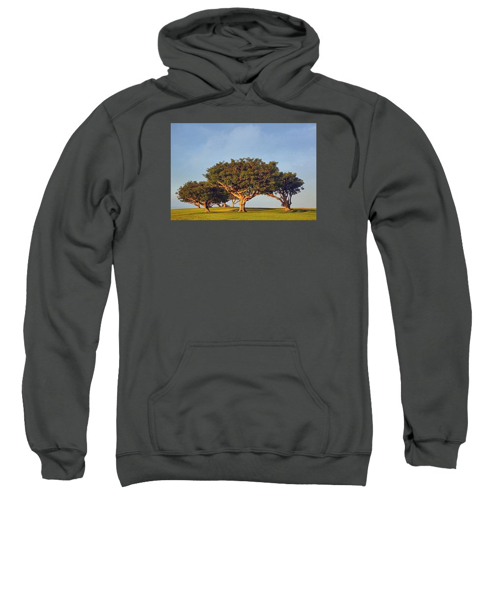 Trees Sweatshirt featuring the photograph Morning Glory Txb by Theo O'Connor
