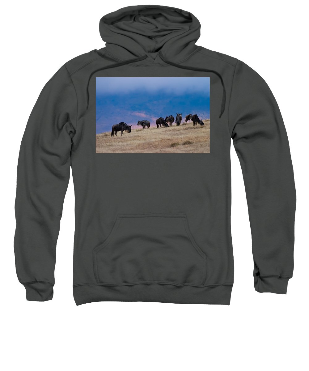 3scape Photos Sweatshirt featuring the photograph Morning In Ngorongoro Crater by Adam Romanowicz