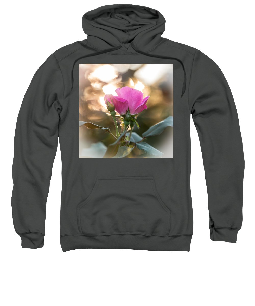 Beautiful Sweatshirt featuring the photograph Morning Rose by Charles 'Duck' Unitas