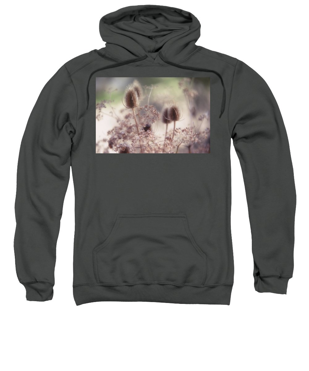 Grass Sweatshirt featuring the photograph Morning Softness. Wild Grass by Jenny Rainbow