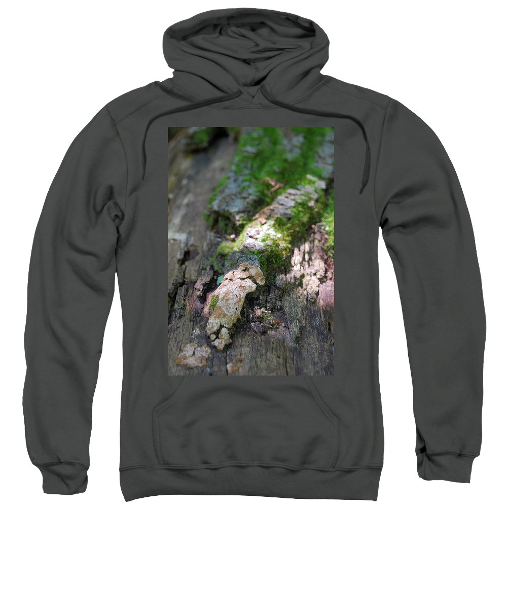 Moss Sweatshirt featuring the photograph Mossy Tree by Trish Hale
