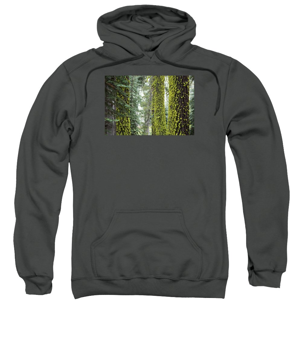 Woods Sweatshirt featuring the photograph Mossy Trees by Ruta Swanson
