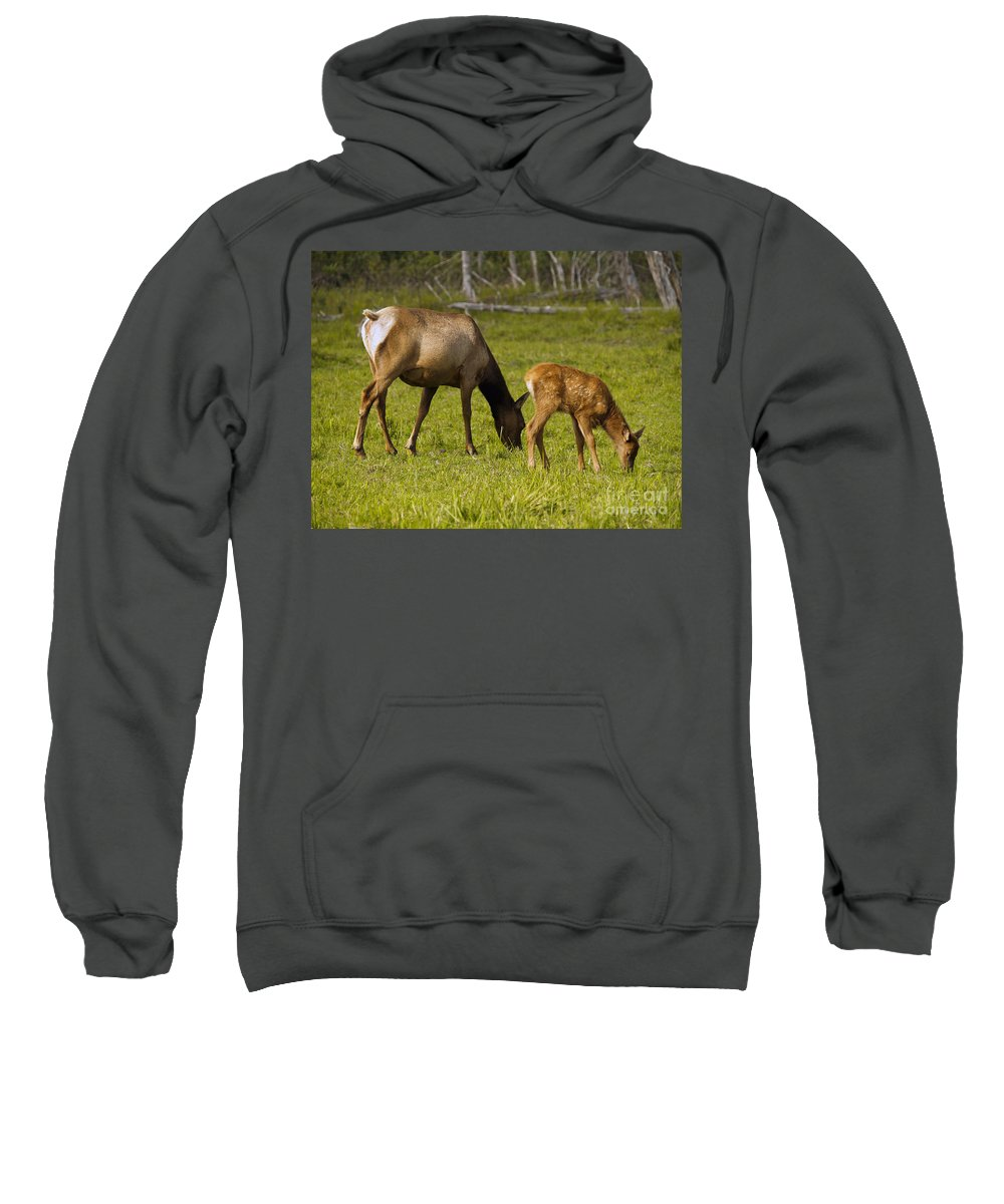 Elk Sweatshirt featuring the photograph Mother Elk And Fawn by Denise McAllister