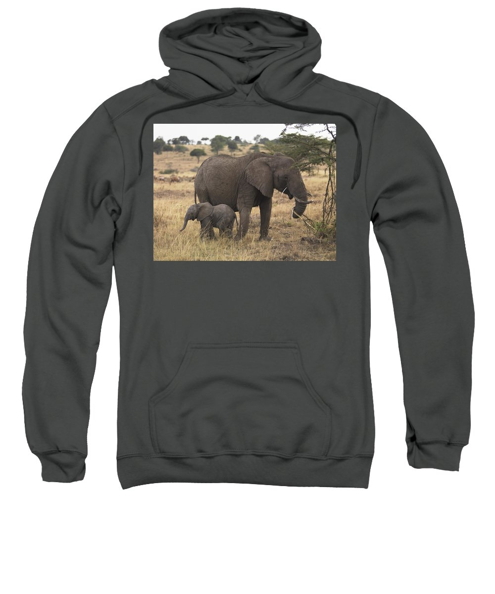 African Animals Sweatshirt featuring the photograph Mother And Baby Elephant by Keith Levit