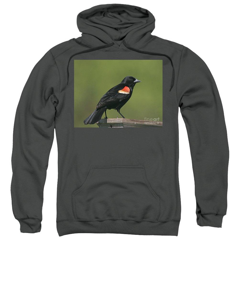 Bird Sweatshirt featuring the photograph Mr Blck Bird by Robert Pearson