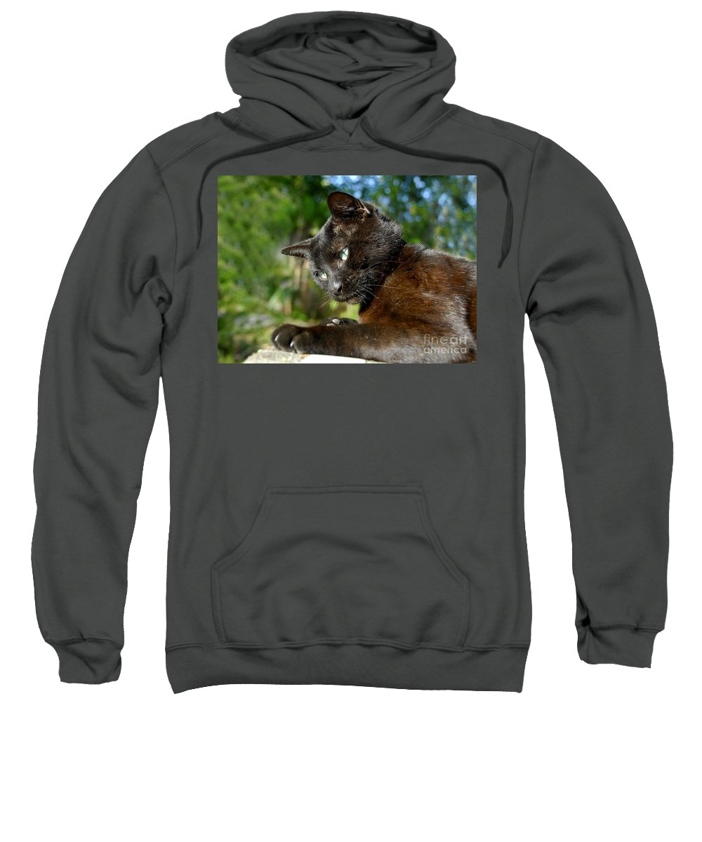 Cat Sweatshirt featuring the photograph Mr. Night by David Lee Thompson