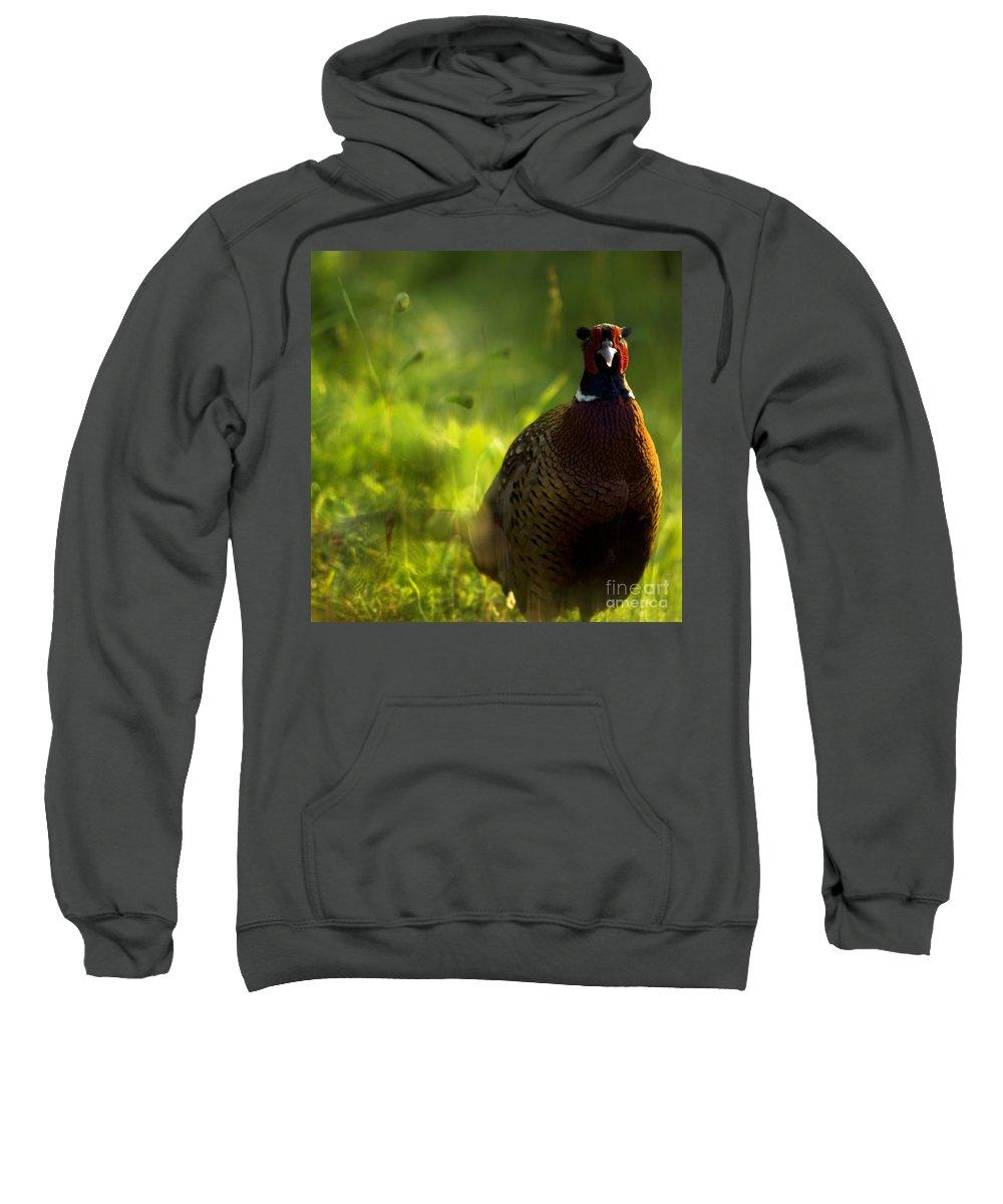 Bird Sweatshirt featuring the photograph Mr Pheasant by Angel Ciesniarska