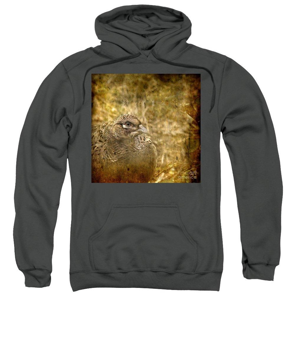 Pheasant Sweatshirt featuring the photograph Mrs Pheasant by Angel Ciesniarska