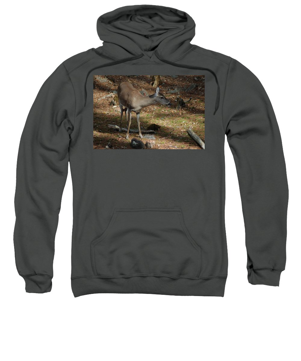 Doe Sweatshirt featuring the photograph Ms Doe by Lucy Bounds