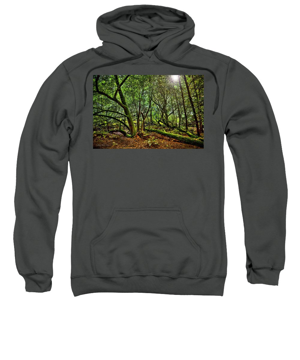 Landscape Sweatshirt featuring the photograph Muir Woods Rejuvenation by Brian Tada