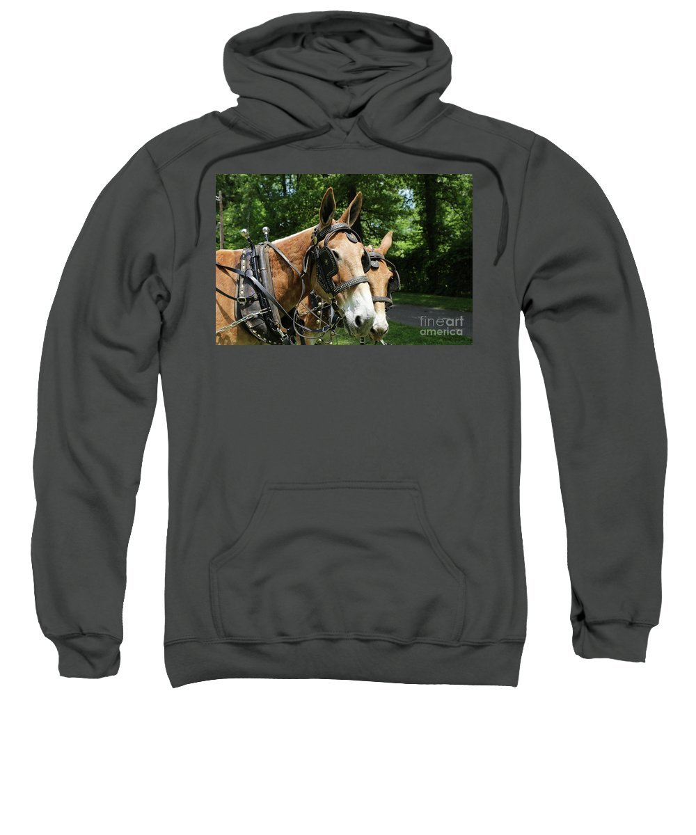 Mule Sweatshirt featuring the photograph Mule 5 by Dwight Cook