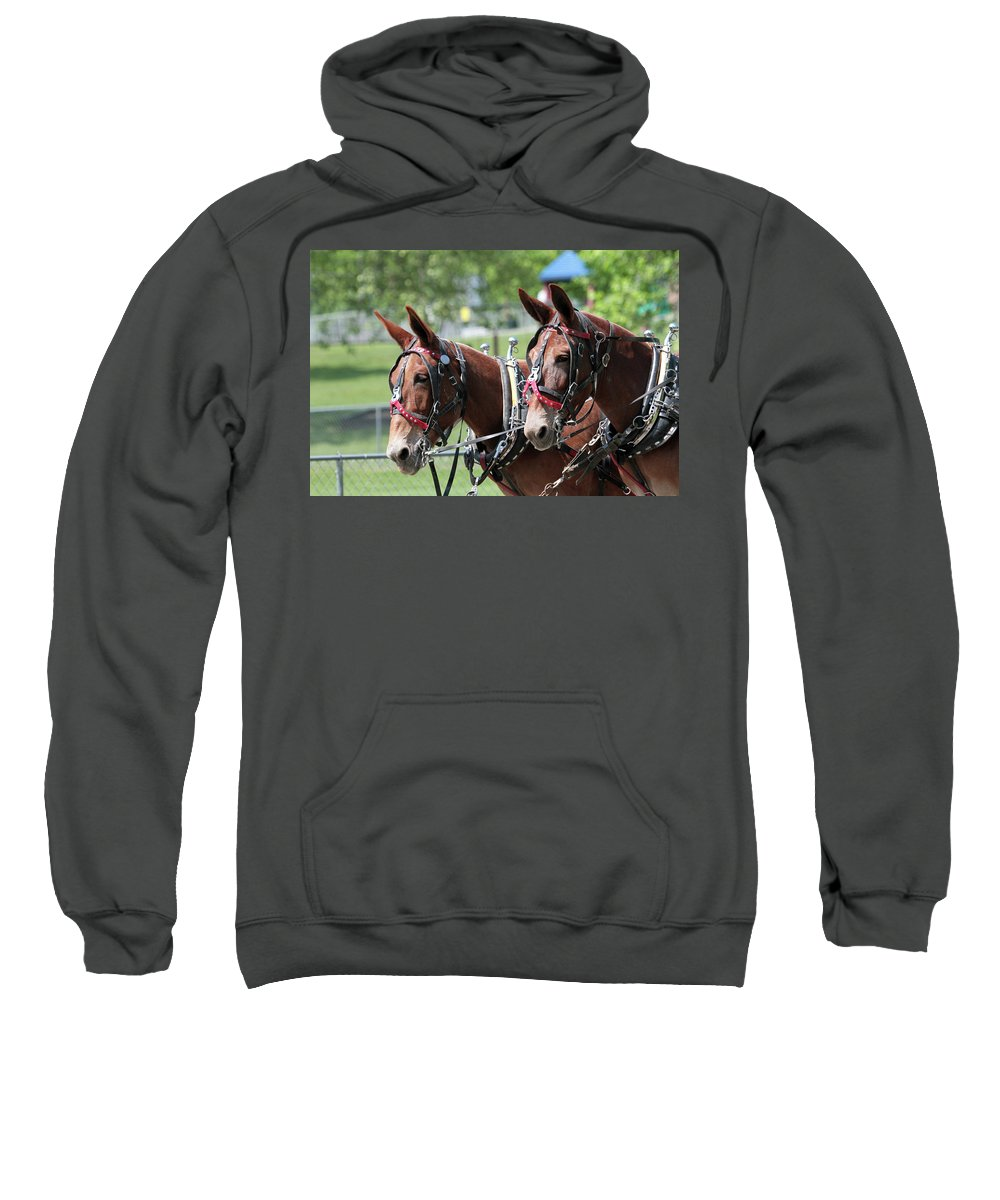 Mule Sweatshirt featuring the photograph Mules Day 2016 by Dwight Cook