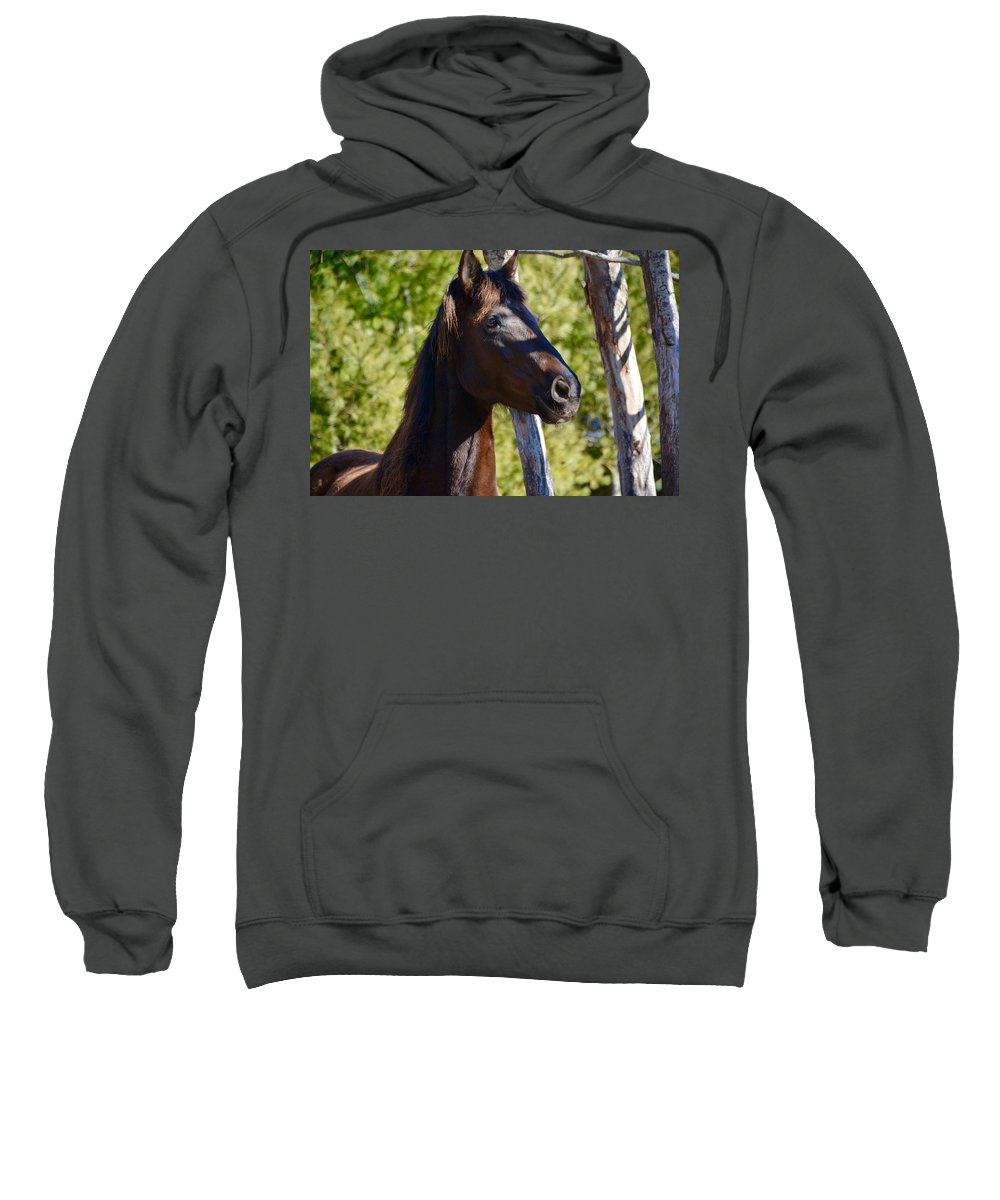 Mustang Horse Sweatshirt featuring the photograph Mustang Horse by Jordan Pierrotti