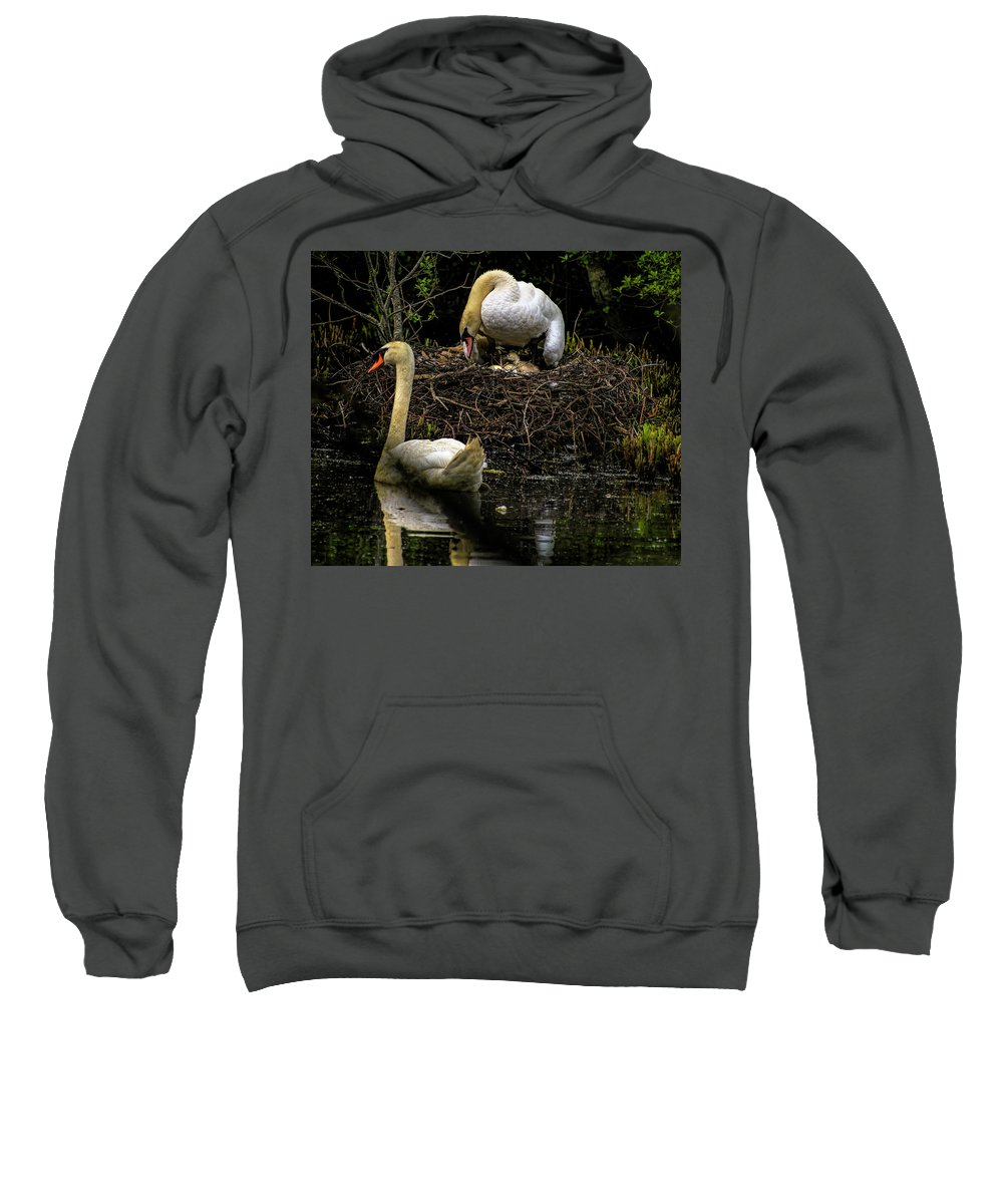 001 Avian Sweatshirt featuring the photograph Mute Swan Family by Myer Bornstein
