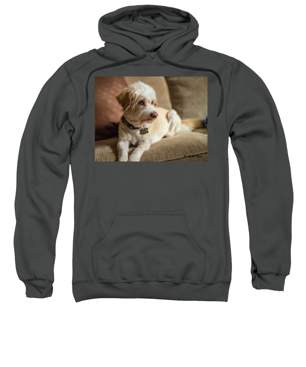 Dog Sweatshirt featuring the photograph My Best Friend by Ed Clark