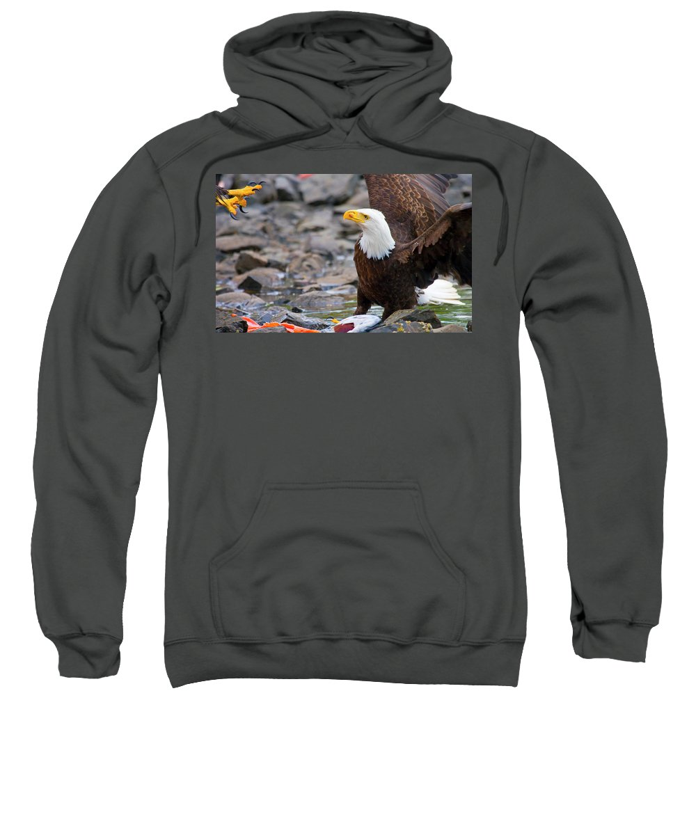 Eagle Sweatshirt featuring the photograph My Dinner by Mike Dawson