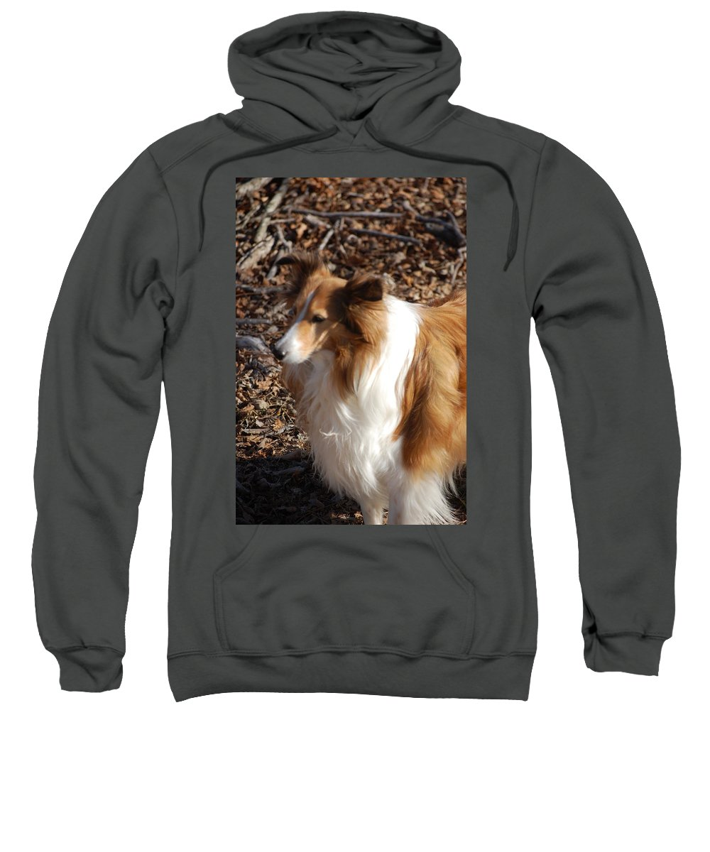 Dog Sweatshirt featuring the digital art My New Best Friend by David Lane