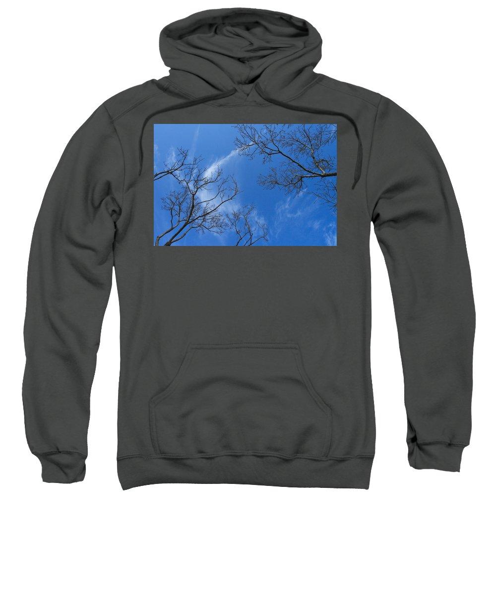 Tree Sweatshirt featuring the photograph My Trees No.13 by Malik Avunduk