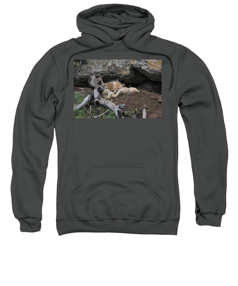 Coyote Sweatshirt featuring the photograph Nap Time by Steve Stuller