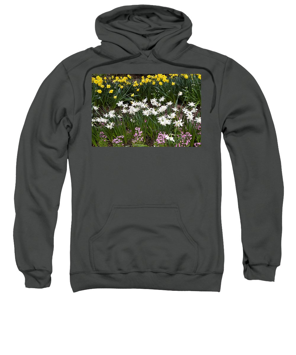 Flower Sweatshirt featuring the photograph Narcissus And Daffodils In A Spring Flowerbed by Louise Heusinkveld