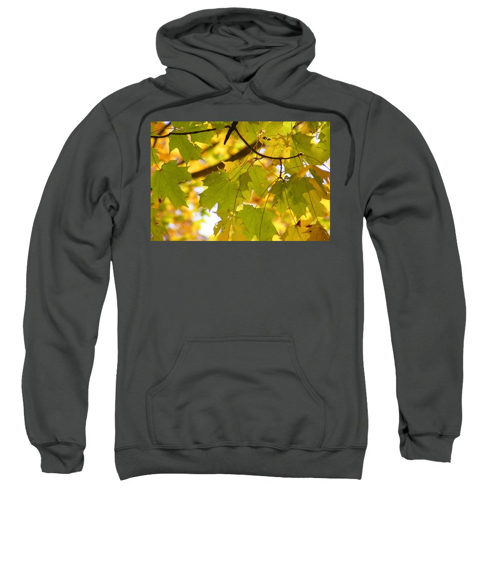 Leaves Sweatshirt featuring the photograph Natures Glow by Ed Smith