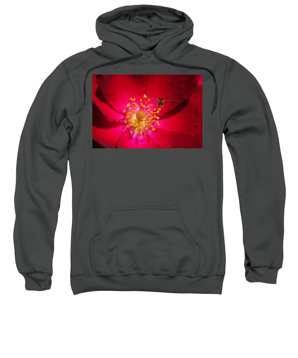 Glow Sweatshirt featuring the photograph Natures Glow by Frozen in Time Fine Art Photography